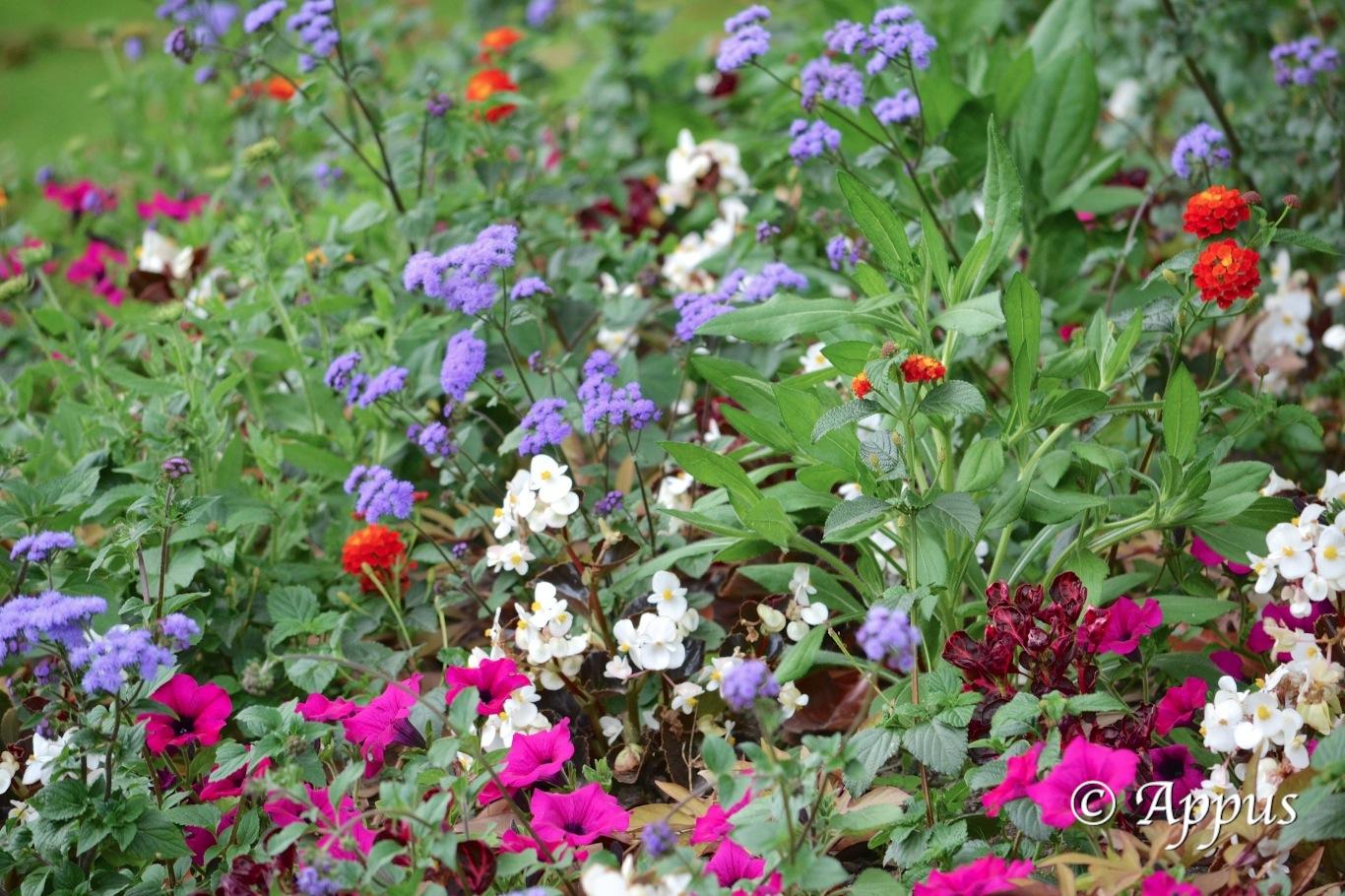 Fleurs nantaises appus photos for Jardin des plantes nantes de nuit